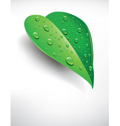 Background fresh green leaf with drops of water vector