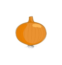 Onion Isolated on White Background vector image