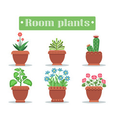 Room plants in pots with blossom and spikes set vector