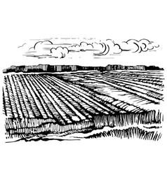 rural landscape agricultural crops vector image