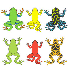 Set color with tropical tree frog vector