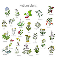 Vintage collection of medical herbs vector