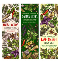 garden herbs and farm spice market sketch banners vector image
