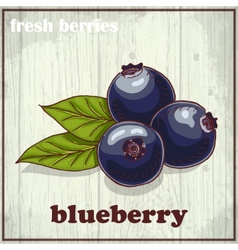 Hand drawing of blueberry Fresh vector