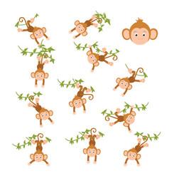 Monkey on a vine vector