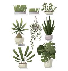 Set home plants vector