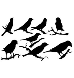 Set of sparrows on branches vector