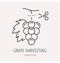 Simple logo template wine harvesting vector