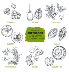 superfood hand drawn sketch vector image