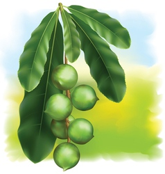 leaves and fruits vector image vector image