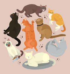Cats show grooming or veterinary feline flyer vector