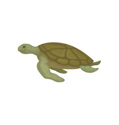 Turtle reptile animal side view vector
