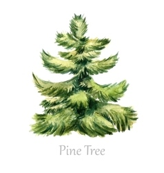 Watercolor christmas tree vector
