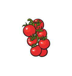 bunch of ripe vine tomatoes vector image
