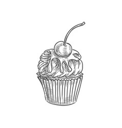 Chocolate muffin cupcake with cherry isolated cake vector