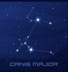 Constellation canis major great dog night star vector