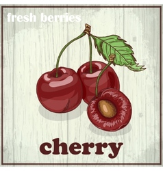 Hand drawing of cherry Fresh berries vector image