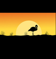 Silhouette of flamingo at sunset landscape vector