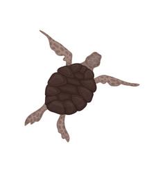 tortoise reptile animal with brown relief shell vector image