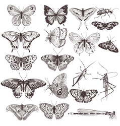 Collection of hand drawn butterflies vector