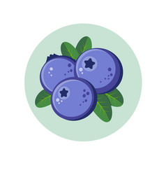 Blueberry berries in green circle vector