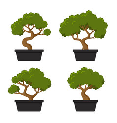 bonsai tree icon set vector image