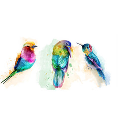Colorful tropic birds watercolor beautiful vector