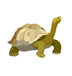 giant tortoise animal turtle reptile in nature vector image