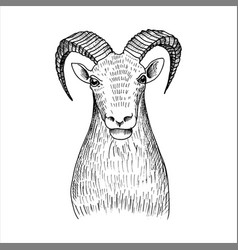 hand drawn head mutton vector image