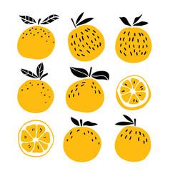 set of oranges fruits vector image