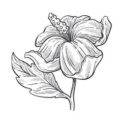 Wild rose flower or hibiscus plant isolated sketch vector