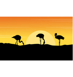 at sunset flamingo landscape silhouettes vector image