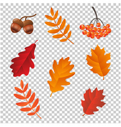autumn set lsolated vector image