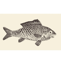 Fish bream vintage engraved vector