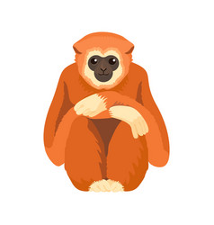 gibbon primate mammal monkey in wildlife vector image