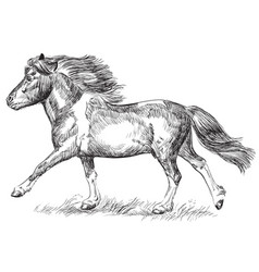 Hand drawing image pony galloping vector