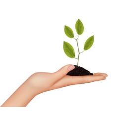 hard with plant vector image