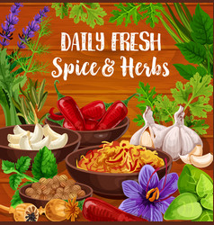 Herb and spice food seasonings condiments vector