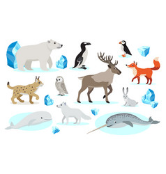 Set of polar animals icons isolated on white vector