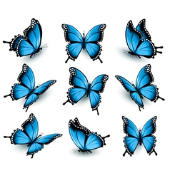 Set of beautiful blue butterflies vector image vector image