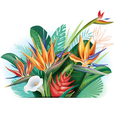 arrangement from tropical flowers vector image