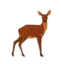 Deer isolated vector