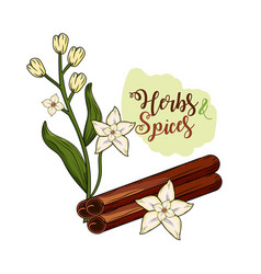 Herbs and spices plants and organ food vector