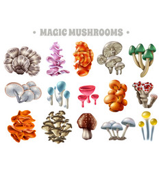 Magic mushrooms set vector