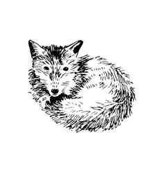 hand drawn fox vector image vector image