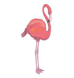pink flamingo exotic bird cool flamingo vector image