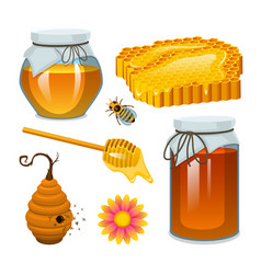 honey in jar bee and hive spoon and honeycomb vector image