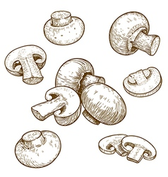 Engraving champignons set vector