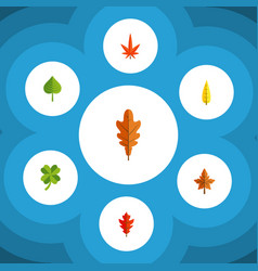 Flat icon leaves set of hickory leafage linden vector