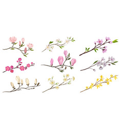 set of flowering branches with small flowers and vector image